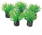 Superfish Mini Aquariumplantjes - Set 5 stuks - 2 cm