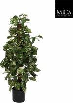 Mica Decorations scindapsus maat in cm: 100 x 45 in plastic pot