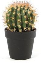 Cactus groen in pot 29 cm hoog