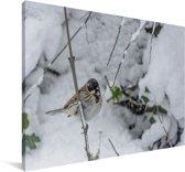 Een rietgors in de sneeuw Canvas 180x120 cm - Foto print op Canvas schilderij (Wanddecoratie woonkamer / slaapkamer) XXL / Groot formaat!