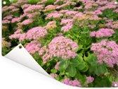 Een veld met bloeiende hemelsleutels Tuinposter 40x30 cm - klein - Tuindoek / Buitencanvas / Schilderijen voor buiten (tuin decoratie)