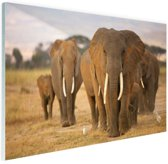 Olifanten familie Glas 30x20 cm - Foto print op Glas (Plexiglas wanddecoratie)