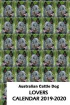 Australian Cattle Dog Lovers Calendar 2019-2020