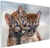 Twee poema welpen Glas 30x20 cm - klein - Foto print op Glas (Plexiglas wanddecoratie)