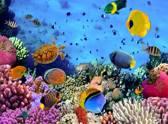 Heel mooi Fotobehang Onder de zee met tropische vissen - 232 cm x 315 cm - Multi