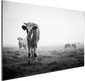 Koeien in de ochtendmist zwart-wit foto Aluminium 30x20 cm - Foto print op Aluminium (metaal wanddecoratie)
