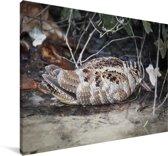 Houtsnip aan de rand van een vijver Canvas 140x90 cm - Foto print op Canvas schilderij (Wanddecoratie woonkamer / slaapkamer)