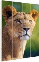 Jonge leeuwin Hout 40x60 cm - Foto print op Hout (Wanddecoratie)