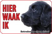 Bord - Hond-Labradoodle
