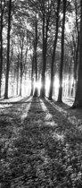 Fotobehang Bos | Zwart, Wit | 91x211cm