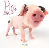 Kalender 2020 Varkentjes (30 x 30)
