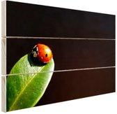 Lieveheersbeest blad zwarte achtergrond Hout 120x80 cm - Foto print op Hout (Wanddecoratie)