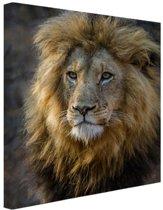 Leeuwenkoning Canvas 60x80 cm - Foto print op Canvas schilderij (Wanddecoratie woonkamer / slaapkamer) / Dieren Canvas Schilderijen