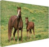 Bruin paard met jong Canvas 30x20 cm - klein - Foto print op Canvas schilderij (Wanddecoratie woonkamer / slaapkamer) / Dieren Canvas Schilderijen