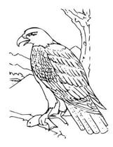 Bald Eagle Composition Notebook, Wide Ruled