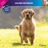Golden Retriever Kalender 2020