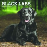 Black Labrador Retrievers Kalender 2020