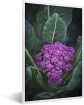 Foto in lijst - Een paarse bloemkool omringd door mooie bladeren fotolijst wit 40x60 cm - Poster in lijst (Wanddecoratie woonkamer / slaapkamer)