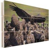 Vale gier met gestrekte vleugels in een grote groep Vurenhout met planken 90x60 cm - Foto print op Hout (Wanddecoratie)