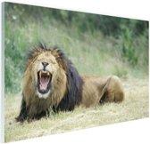 Stoere leeuw Glas 120x80 cm - Foto print op Glas (Plexiglas wanddecoratie)