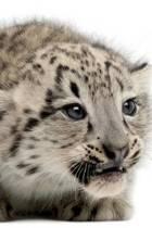 Snow Leopard Notebook & Journal. Productivity Work Planner & Idea Notepad