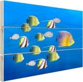 Grote vis leider van tropische vissen Hout 30x20 cm - klein - Foto print op Hout (Wanddecoratie)
