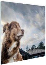 Starende hond Glas 60x40 cm - Foto print op Glas (Plexiglas wanddecoratie)
