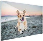 Hond op het strand Glas 30x20 cm - Foto print op Glas (Plexiglas wanddecoratie)