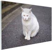 FotoCadeau.nl - Witte kat zit midden op straat Glas 90x60 cm - Foto print op Glas (Plexiglas wanddecoratie)