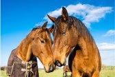 Poster paarden | Dieren poster | 60x40 cm liggend