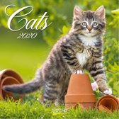 Kalender 2020 Cats (30 x 30)  (30 x 30)