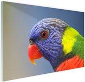 Regenbooglori Glas 120x80 cm - Foto print op Glas (Plexiglas wanddecoratie)