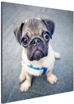 Puppy ogen Aluminium 50x50 cm - Foto print op Aluminium (metaal wanddecoratie)