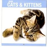 Maandkalender -2020 - Cats & Kittens - 29x31cm - omslagkalender