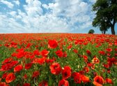 Papermoon Red Poppy Field Vlies Fotobehang 250x186cm 5-Banen