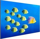 School tropische vissen Aluminium 120x80 cm - Foto print op Aluminium (metaal wanddecoratie)