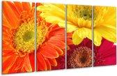 Glasschilderij Bloem | Geel, Oranje, Rood | 160x80cm 4Luik | Foto print op Glas |  F000514