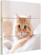 Close-up van kat Hout 160x120 cm - Foto print op Hout (Wanddecoratie) XXL / Groot formaat!