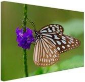 Vlinder paarse bloem Canvas 120x80 cm - Foto print op Canvas schilderij (Wanddecoratie)