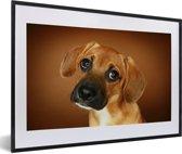 Foto in lijst - Portret van een goudbruine Beagle fotolijst zwart met witte passe-partout 60x40 cm - Poster in lijst (Wanddecoratie woonkamer / slaapkamer)