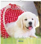 Honden Kalender 2020