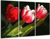 Glasschilderij Tulpen | Rood, Wit, Groen | 120x80cm 3Luik | Foto print op Glas |  F001579