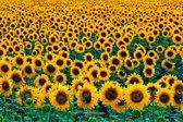 Papermoon Field of Sunflowers Vlies Fotobehang 200x149cm 4-Banen