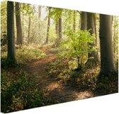 Een bospad verlicht door de zon Canvas 120x80 cm - Foto print op Canvas schilderij (Wanddecoratie)