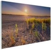 Droge woestijn met plantjes  Glas 180x120 - XXL cm - Foto print op Glas (Plexiglas wanddecoratie)