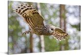 Oeraluil vliegt door het park Aluminium 120x80 cm - Foto print op Aluminium (metaal wanddecoratie)