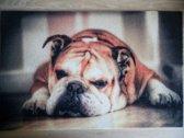 Deurmat 40x60 Engelse Bulldog Liggend