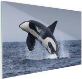 Springende orka Glas 90x60 cm - Foto print op Glas (Plexiglas wanddecoratie)