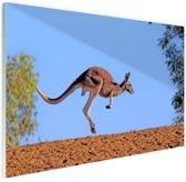 Rode kangoeroe Glas 60x40 cm - Foto print op Glas (Plexiglas wanddecoratie)