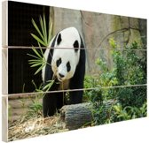 FotoCadeau.nl - Grote panda Hout 60x40 cm - Foto print op Hout (Wanddecoratie)
